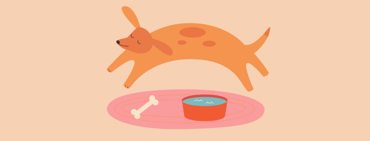 orange dog jumping over a bone and bowl of water