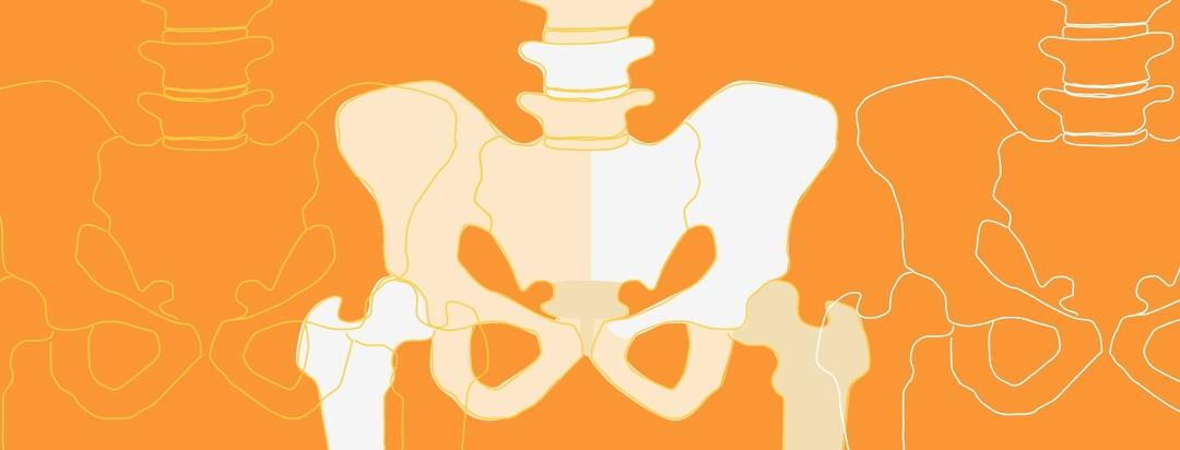 Pelvis bones showing the sacroiliac joints