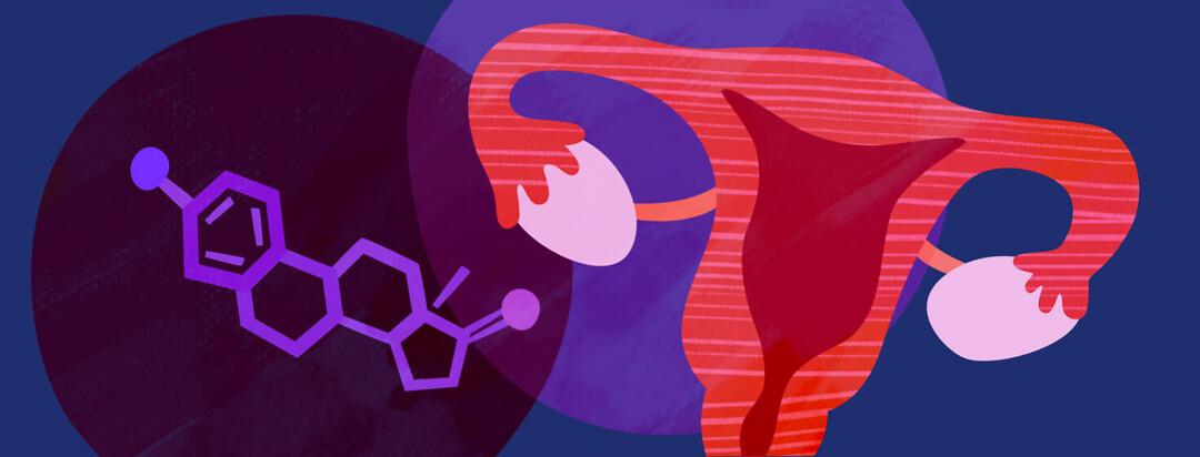 An estrogen molecule, a uterus, and ovaries